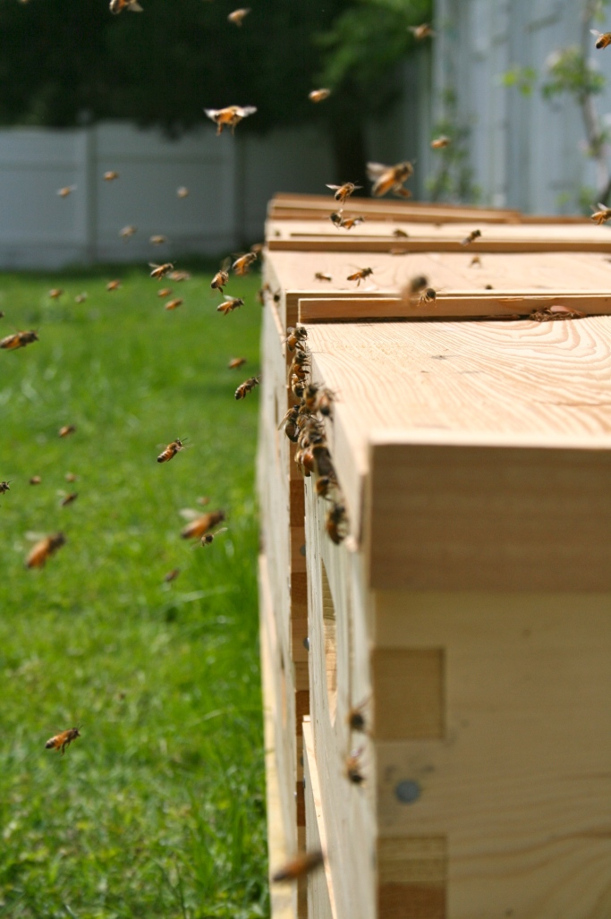Bees returning to the hive after collecting pollen | ahealthylifeforme.com